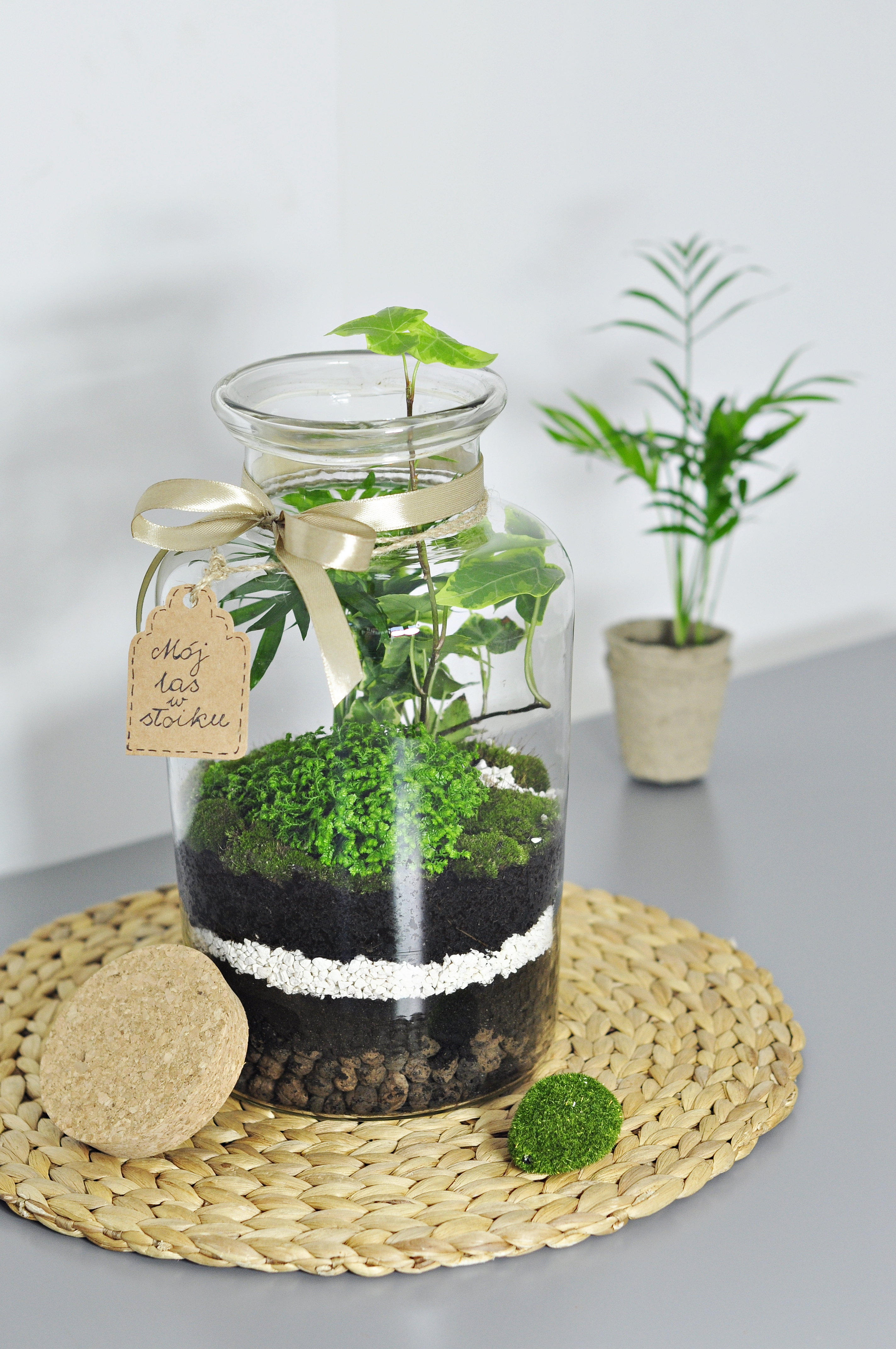 Jak zrobić las w słoiku / DIY idealne dla Dzieci :)